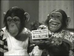PG TIPS MONKEYS TV AD SHOT