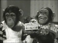 PG TIPS MONKEYS TV AD SHOT